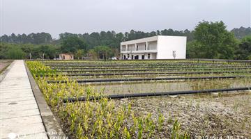 彭山成眉石化园区人工湿地项目